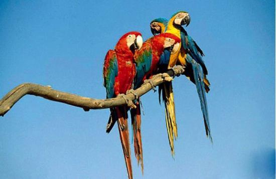 百科 自然 > 正文    亚马逊森林里的植物可谓是异常的繁多,仅仅一个