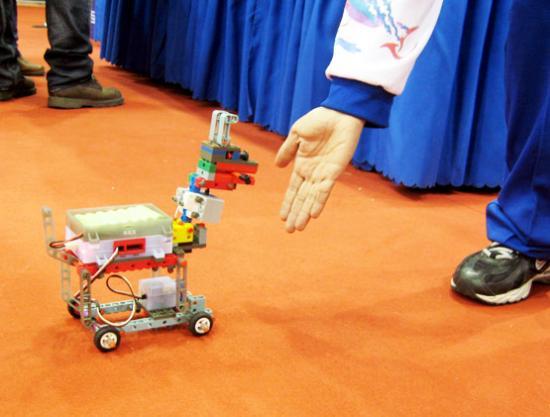 黏人狗:只要主人在前方招呼,这只小狗就会紧紧地跟着走