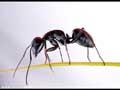 迷你世界之蚂蚁战队