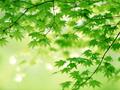 自然发现——植物的秘密生活