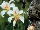 《中国情怀》:境界与平常心