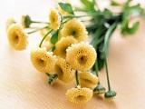 鲜花礼仪之属于十二星座的鲜花