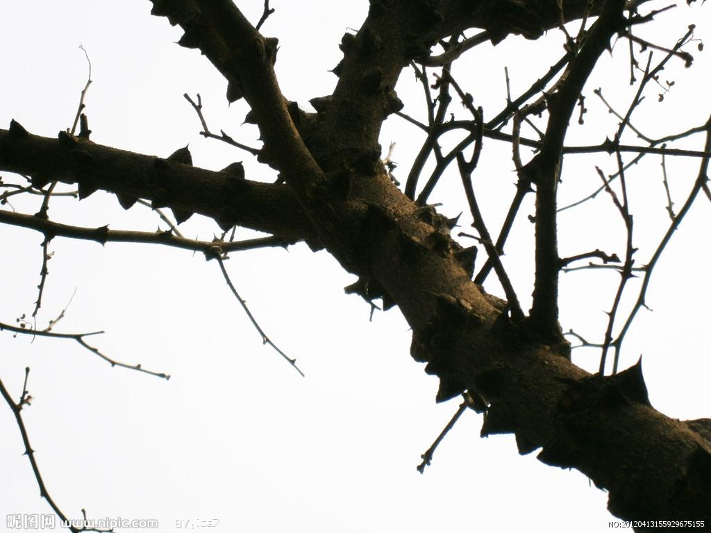 树枝要掉下来了 工科男计算伤害公式