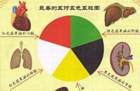 夏季吃5种颜色蔬果健康活力