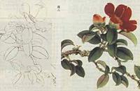 国画工笔花卉技法