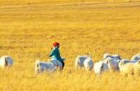 从放羊娃到高原第一镇小学校长:顿珠确巴的教育梦