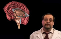 【视频】用脑法则之注意力