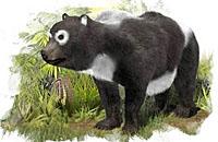 西班牙发现迄今最古老大熊猫祖先化石