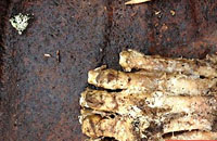 美国丛林发现神秘趾骨 猜测可能属于大脚野人
