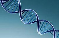 现代农业对生物基因和动物的影响