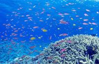 大卫·盖罗:深海中的生命