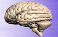 人脑潜能及其开发