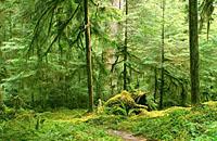 城市污染气体可与森林排放物反应