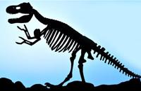 西北大学公开课:你了解化石么?