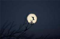 明·文征明《念奴娇·中秋对月》