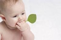 西雅图太平洋大学公开课:新生儿大脑智力开发
